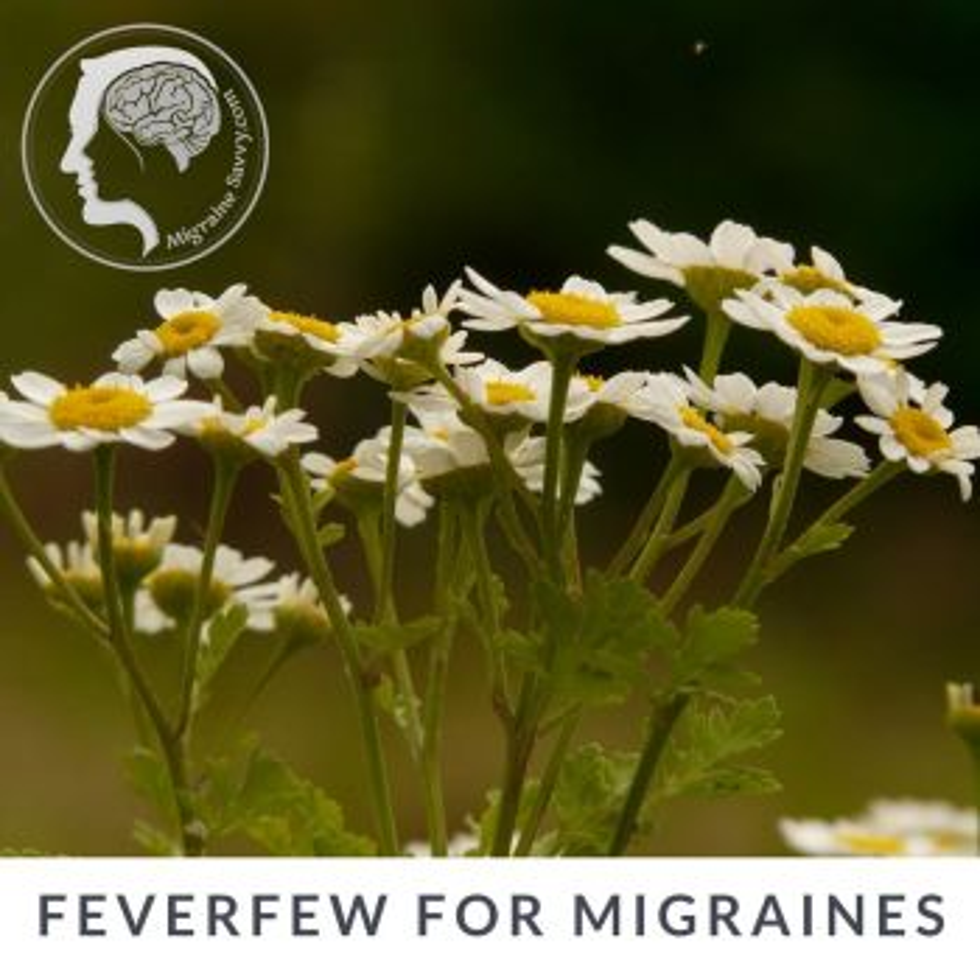 Feverfew for Migraines @migrainesavvy